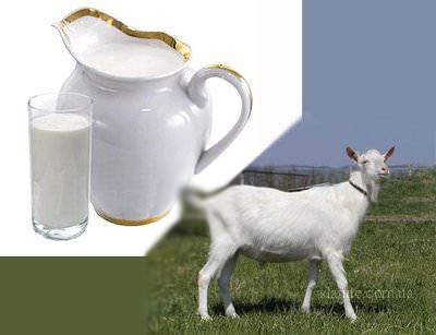 Пейте козье молоко – будете здоровы!