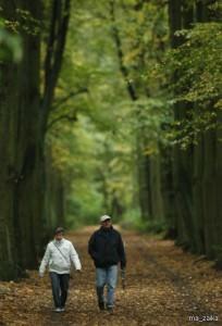 Прогулка — как лучшее лекарство