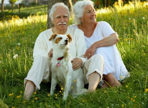 Собаки для пожилых людей в квартире