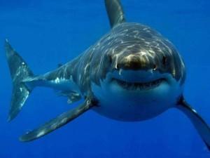 Акулы в борьбе с раком кожи