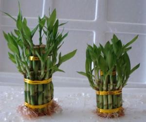 Комнатные растения, являющиеся источником энергии успеха