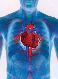 Народная медицина: лечение болезней сердца