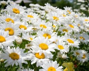 Цветы - подарок и лекарство