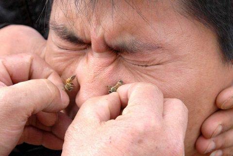 Смягчение пчелиных укусов