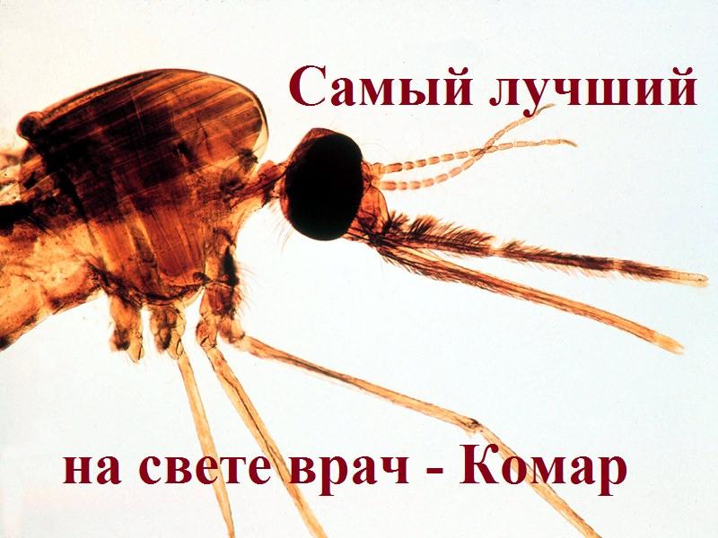 самый лучший на свете врач - Комар
