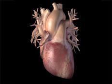 Пересаженное второй раз сердце